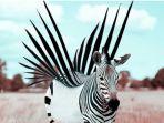 zebra-menakjubkan_20180326_154848.jpg