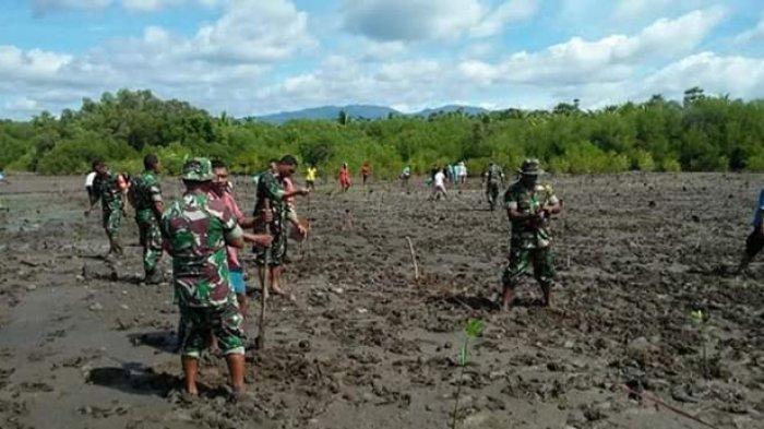Koramil Borong Tanam Mangrove untuk Cegah Abrasi
