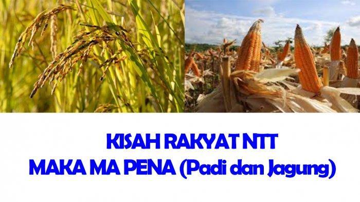 Cerita Rakyat NTT : Maka Ma Pena atau Padi dan Jagung dari Amarasi
