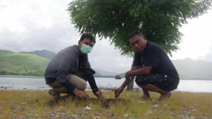 Mohammad Gama Ketua Kita Untuk Indonesia, Gerardus Mayolus Kolo Camat Wolowae Aksi Penanaman Pohon Kelapa di Pulau Kinde (Kita Untuk Indonesia/Indah Fitria Annisa)