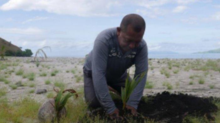 Kasianus Pengurus Yayasan Sa'o Mere Aksi Penghijauan melalui Penanaman Pohon Kelapa (Kita Untuk Indonesia/Indah Fitria Annisa)