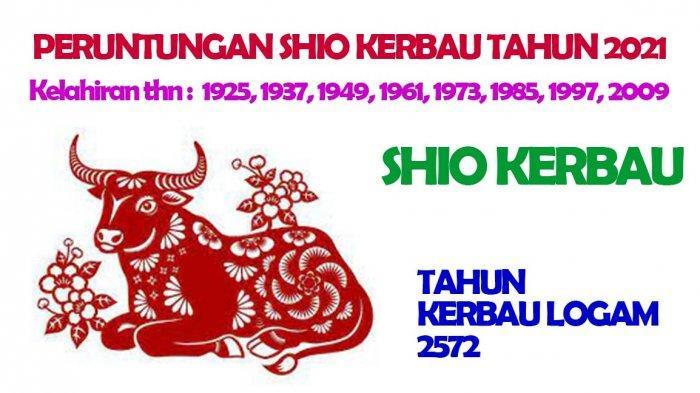 Shio Kerbau dimiliki oleh mereka yang lahir Tahun : 1925, 1937, 1949, 1961, 1973, 1985, 1997, 2009