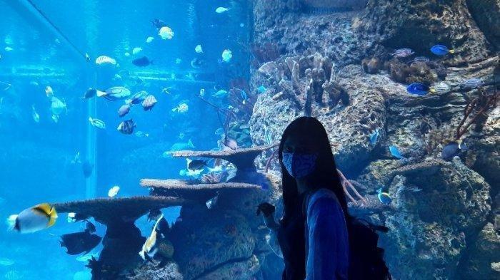 Pendapatan Anjlok Hingga 90%, Jakarta Aquarium & Safari Buka Donasi untuk Penyelamatan Satwa