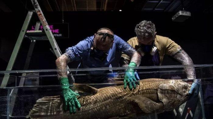 Ikan dari Zaman Dinosaurus Ditemukan Masih Hidup