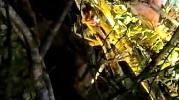 Warga Pidie Dibawa Makhluk Halus, Ditemukan di Atas Pohon, Dalam Kondisi Tak Sadar