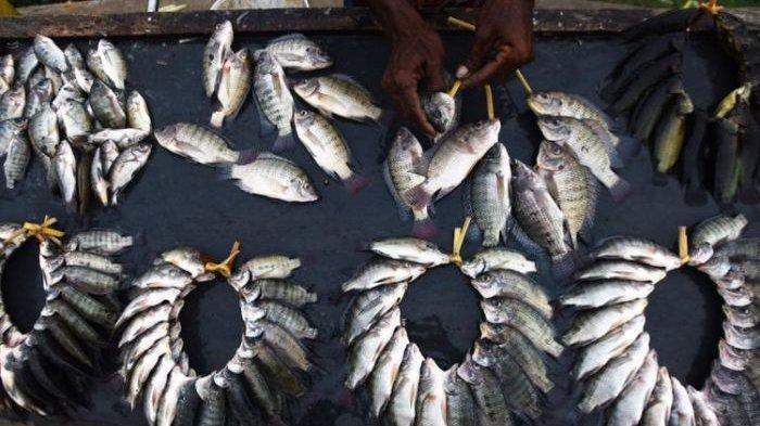 Sepertiga Populasi Ikan Air Tawar Dunia Terancam Punah