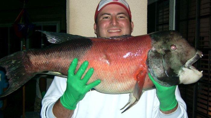 Ikan Aneh Punya Gigi Mirip Manusia Ditemukan di Amerika