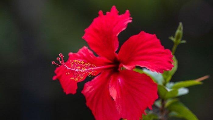 Tujuh Bunga yang Bisa Dimakan dan Bermanfaat bagi Kesehatan