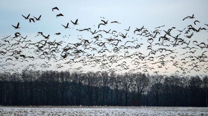 Ada 50 Miliar Jenis Burung di Bumi