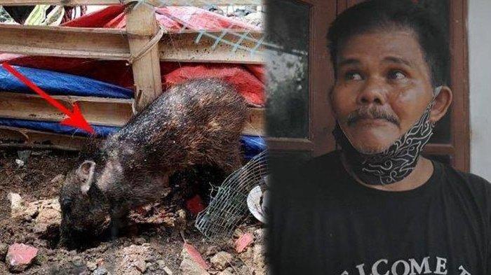 Warga Lihat Pria Berjubah Berubah Jadi Babi Ngepet, Jimat Terlepas Sebelum Dipenggal