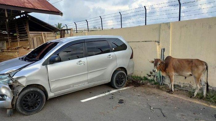 Dipepet Polisi, Xenia Pencuri Lembu Tabrak Tiang Listrik, Setelah Kejar-kejaran di Jalan