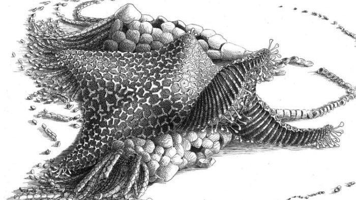 Fosil 480 Juta Tahun Ternyata Nenek Moyang Bintang Laut