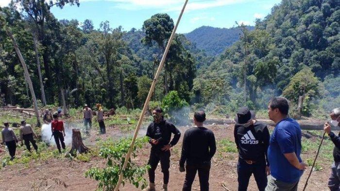 Bareskrim Polri Musnahkan 7 Hektare Ladang Ganja dan Sita 592 Kg Ganja Kering di Gunung Lauser