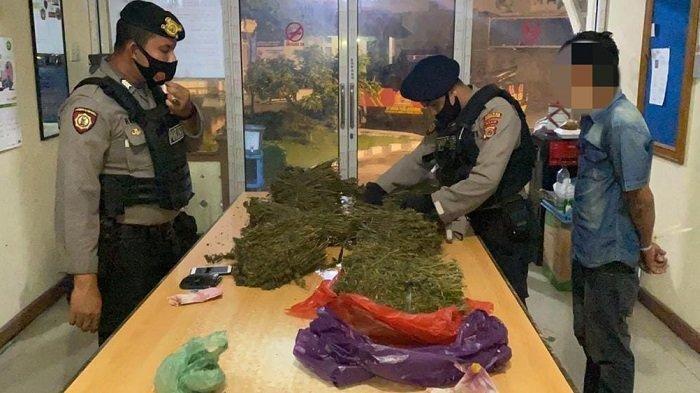 Saat Patroli, Polisi Gagalkan Peredaran 10 Kg Ganja