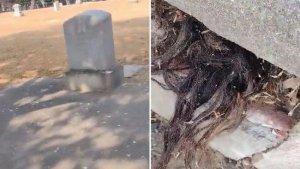 Rambut Keluar dari Kuburan Tua, Perekamnya Ketakutan