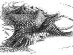 nenek-moyang-bintang-laut.jpg