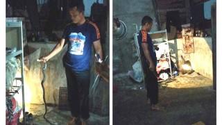 Rumah Warga Lhoong  'Disusupi' Ular Kobra