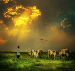 Anak Gembala yang Amanah