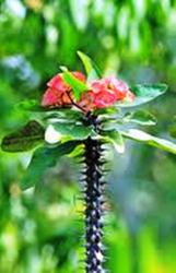 Melihat Duri, Jangan Lupa Melihat Bunga Di Atasnya