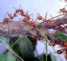 Dan Semut Pun Berdzikir