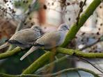 burung-hubungan-suami-istri-seks_20150514_093827.jpg