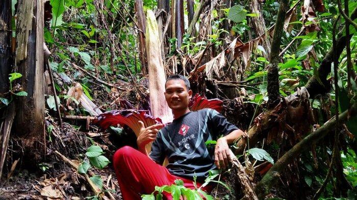 Kuntum bunga bangkai (Amorphopalus titanuum) ditemukan tumbuh di tengah hutan dekat perkebunan warga Desa Jontor, Kecamatan Penanggalan, Kota Subulussalam, Minggu (27/10).