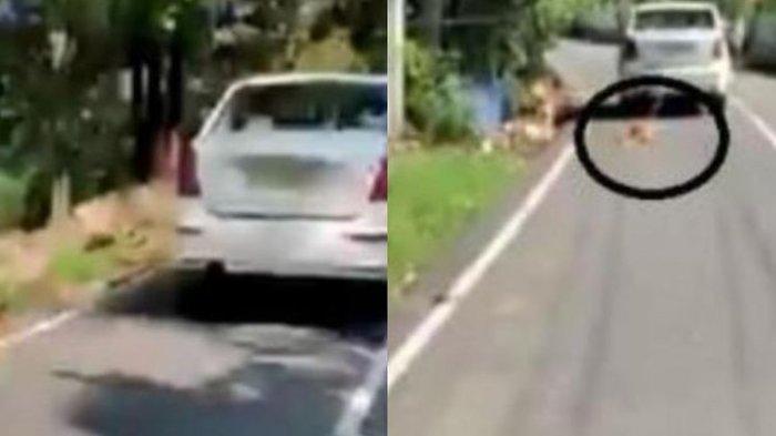 Viral! Seorang Pria Siksa Anjing Peliharaan, Diikat di Mobil dan Diseret Sepanjang Jalan