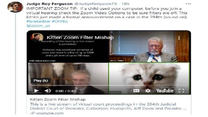Viral Kisah Pengacara Berubah Jadi Anak Kucing Gara-gara Filter Zoom, Panik Tak Bisa Menghilangkan