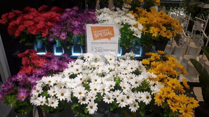 Hiasan Ruangan Bunga Daisy ini Dijual Promo di Informa Solo Paragon Mall