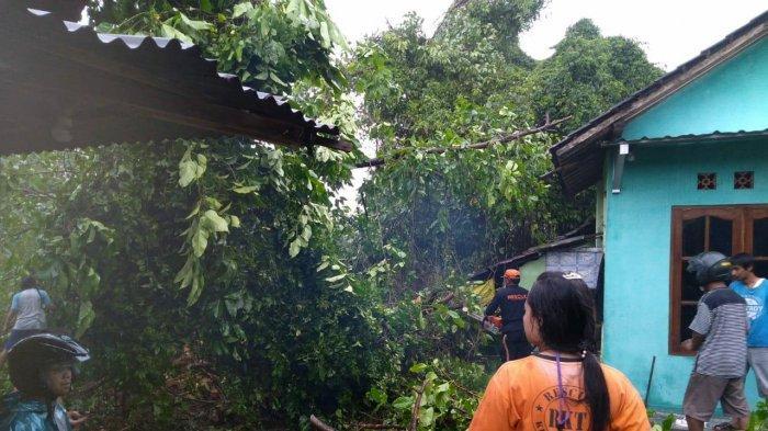 Angin Ribut Landa 4 Kecamatan di Klaten, Pohon Tumbang Timpa Rumah dan Warung Milik Warga