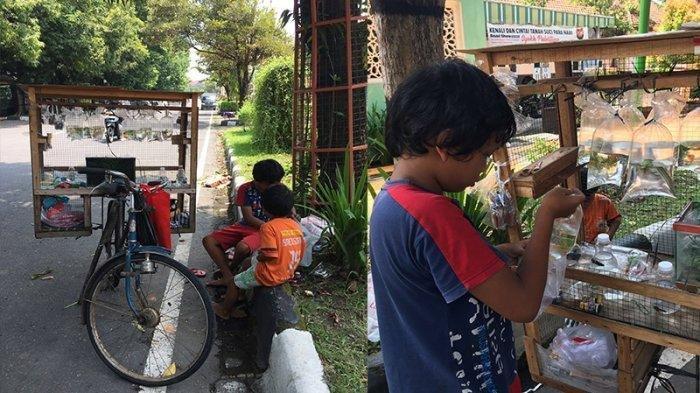 Viral, Foto-foto Dua Bocah di Klaten Jualan Ikan Hias di Pinggir Jalan, Ibunda Disebut Sakit Stroke