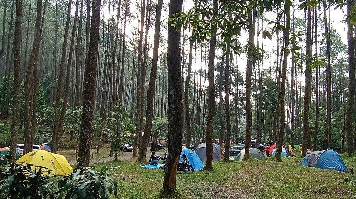 Bumi Sekipan di Kecamatan Tawangmangu, Kabupaten Karanganyar yang menawarkan pesona menginap di tengah hutan.