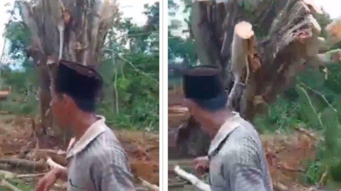 Viral, Video Pohon Tumbang Tiba-tiba Berdiri Sendiri, Komentar Netizen Bikin Salfok