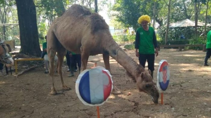 Tiga Hewan di Taman Satwa Jurug Solo Pilih Kroasia Juara Piala Dunia 2018