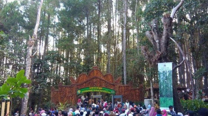 Kunjungi Hutan Pinus Mangunan Bantul, Presiden Jokowi: Hutan Ini Instagramable