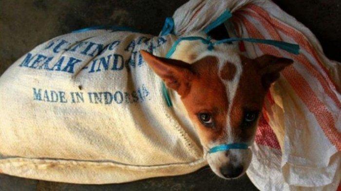 Di Solo, Ini Alasan Anjing Tidak Disembelih Tapi Dipukul Sebelum Jadi Sate : Bisa Mengubah Rasa
