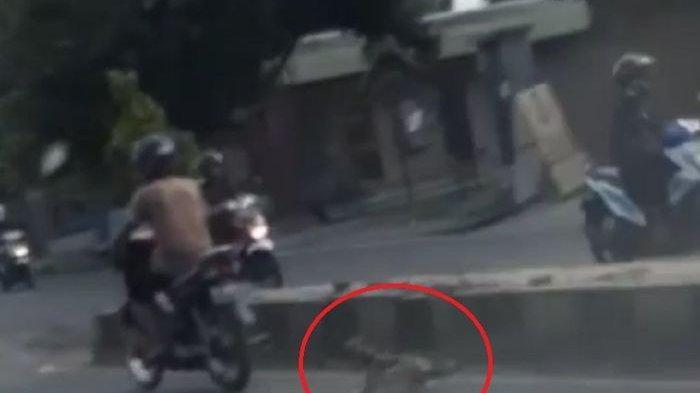 Viral Anjing Diseret di Tangerang, Pemilik Anjing : Enggak Bisa Dilaporkan ke Polisi