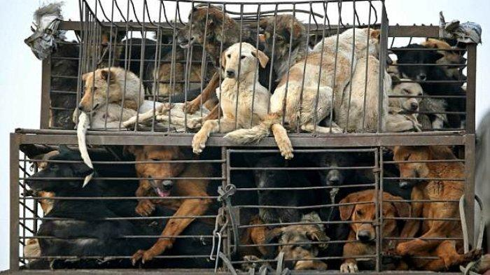 Sukoharjo Larang Penjualan Daging Anjing Mentah Maupun Olahan, Nekat Izin Dagang Dicabut