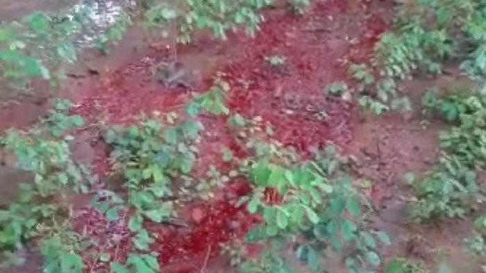 Bikin Merinding Warga, di Sukoharjo Muncul Fenomena Tanah Keluarkan Cairan Merah Mirip Darah Segar