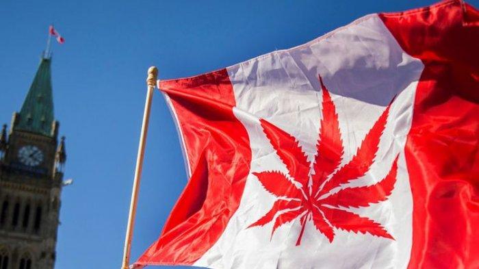 Sudah Dilegalkan, Harga Ganja di Kanada Masih Dianggap Terlalu Mahal