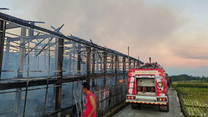 Kebakaran Karanganyar, 7000 Ekor Ayam Mati Terpanggang, Rugi Rp 300 Juta