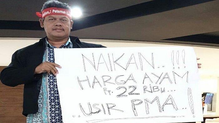 Pinsar Pedaging Jawa Tengah: Harga Ayam Anjlok, Peternak Terancam Gulung Tikar