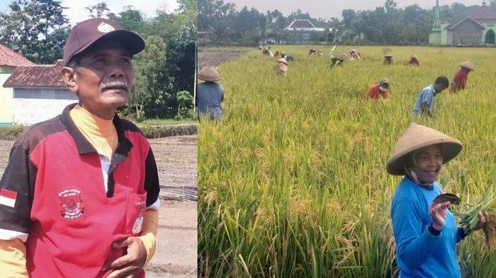 Kisah Suyamto Kades Dermawan di Klaten : Tak Ambil 1 Rupiahpun,Padi di Sawahnya Justru Dipanen Warga