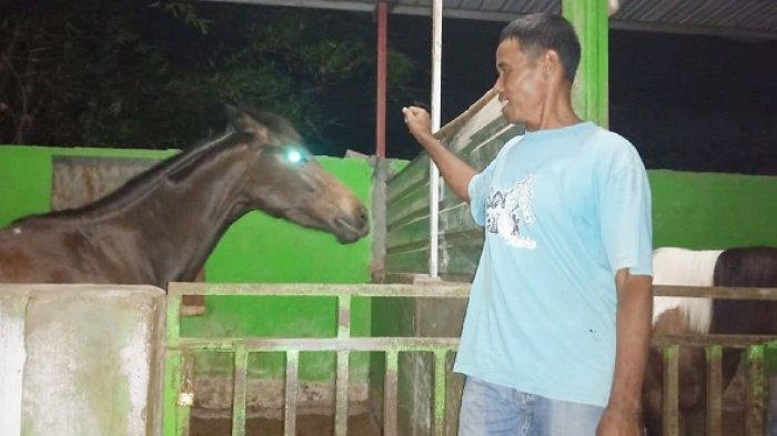Kusir Langganan Presiden Jokowi Siapkan Kuda Terbaik, Berjaga-jaga Dapat Undangan dari Istana Negara
