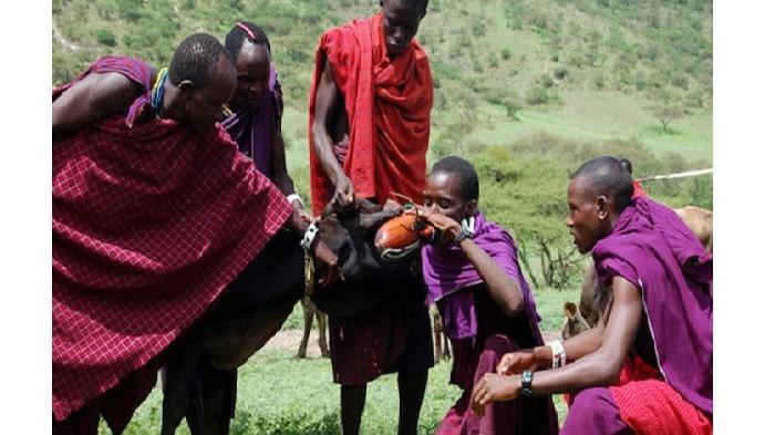 Mengenal Suku Masaai, Suku Peminum Darah Dari Afrika Timur