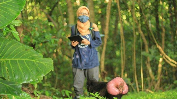 Viral Mahasiswi Hidup di Hutan 10 Bulan demi Penelitian Monyet Yaki, Begini Kisah Sebenarnya
