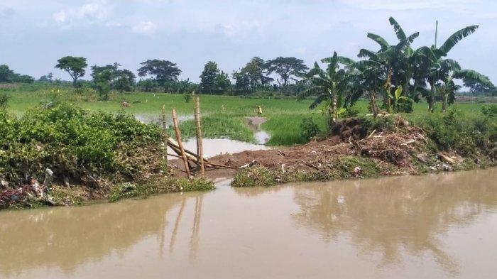 Cuaca Buruk, 1.300 Hektare Sawah di Klaten Terendam Banjir