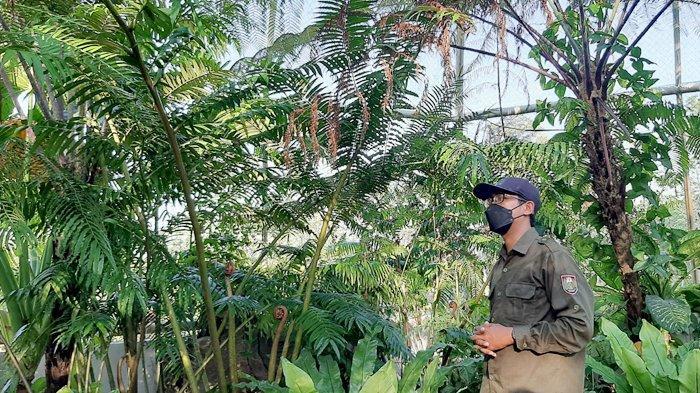SelamatkanPakis Pohon Merapi-Merbabu, Pemkab Boyolali Lakukan Konservasi di Kebun Raya Indrokilo