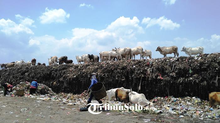 Pengakuan Pemulung di Wonogiri Soal Benda Mirip Bom Buku yang Ditemukan saat Mengais-ngais Sampah