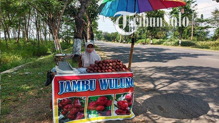 Cerita 1 Desa di Polokarto Jadi Juragan Jambu Wulung, Kini Buka Lapak Dadakan di Penjuru Sukoharjo